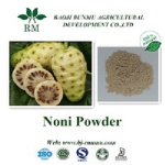 Noni extract powder 4:1