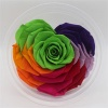 10cm Big Heart-Shape Preserved Rainbow Rose Flower - NTN9R003
