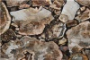 marble crystal petrified wood stone board Bars - MOP3