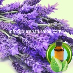 100% Pure France Lavender Essential Oi - 1021