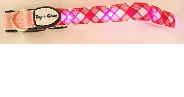 led dog collar - led dog collar