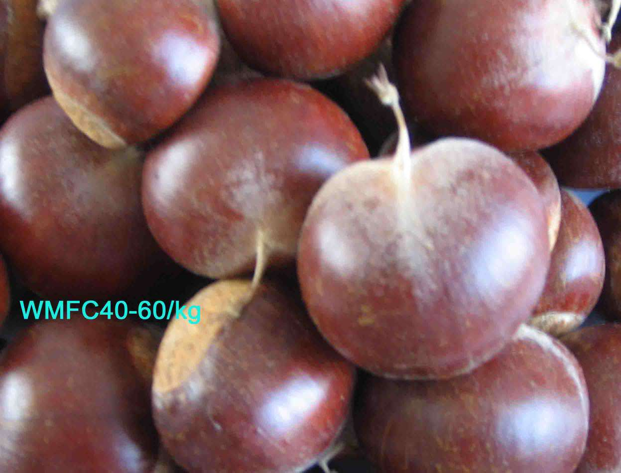 FRESH CHESTNUTS - CHESTNUTS