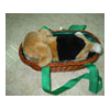 MUSIC DOG IN BASKET - SHS-751